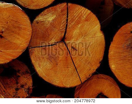 The logs of the tree.Forest logs.Forest production.Harvesting of wood.