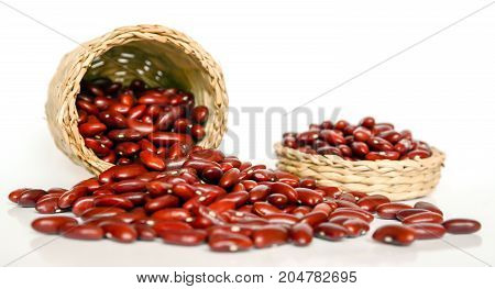 seed, seed bean red and seed baby to garden