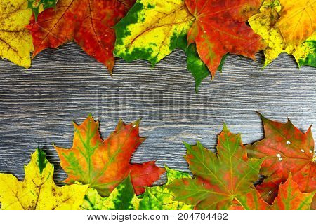 Colorful maple leaves isolated on wooden background.
