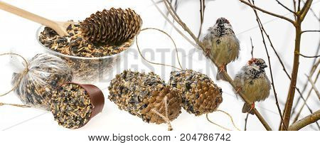 feeders for birds from seeds and sparows on a branch