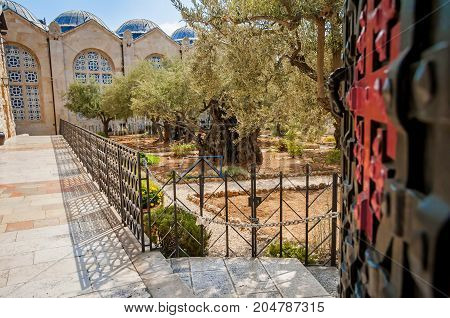 JERUSALEM, ISRAEL. September 15, 2017. An entrance of the Gethsemane garden in Jerusalem where the last supper of Christ and his disciples took place.