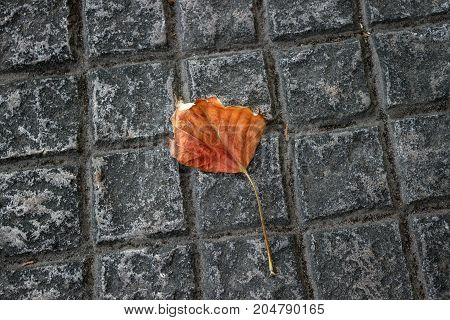 Lonely autumn leaf on the sidewalk. The concept of the autumn loneliness sadness aging.