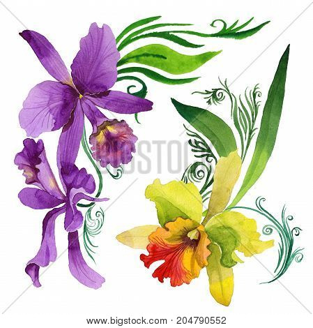 Wildflower orchid flower in a watercolor style isolated. Full name of the plant: colorful orchid. Aquarelle wild flower for background, texture, wrapper pattern, frame or border.