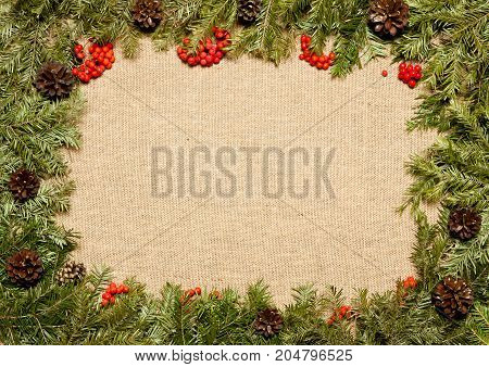 Christmas framework with evergreen fir tree cones and holly berry on burlap background