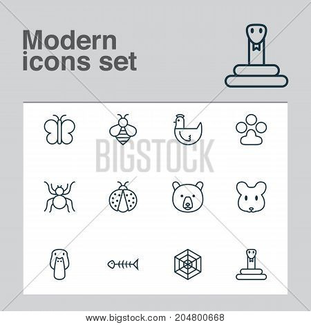 Zoo Icons Set. Collection Of Spider, Duck, Grizzly And Other Elements