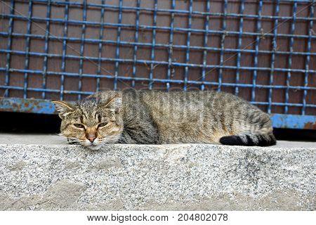 A gray tabby cat lies on a stone floor near a fence with a lattice