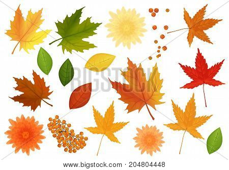Big set of realistic vector leaves and flowers from different kind of trees isolated