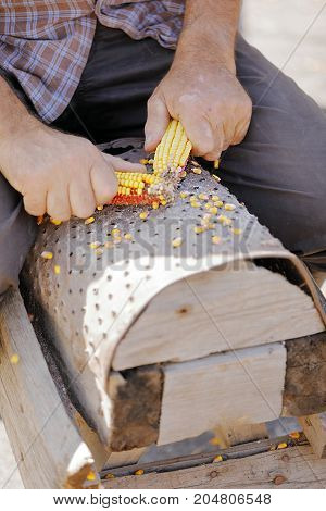 hand maize processing after harvest of a farmer