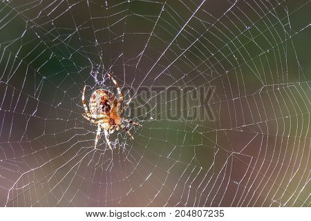 Abstract natural background with web and spider close-up in sunlight on the blurred background of the forest