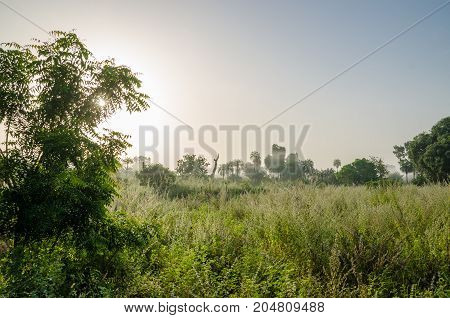 Foggy early morning with sunrise at jungle with palms and lush grass in Gambia, West Africa.