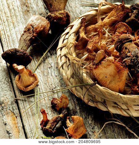 Forest Dried Mushrooms with Chanterelles Porcini and Dry Stems in Wicker Scoop closeup Rustic Wooden background