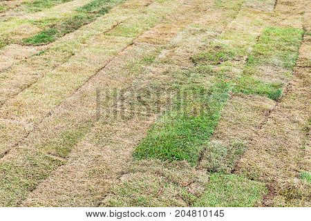 Dried Pieces Of Turf Laid On The Field