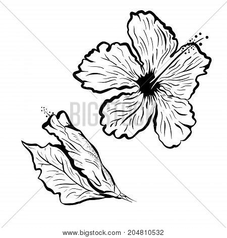 Hibiscus flower in tattoo style. Black and white tropical flower