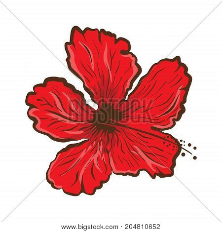 Hibiscus flower in tattoo style. Graphic tropical flower