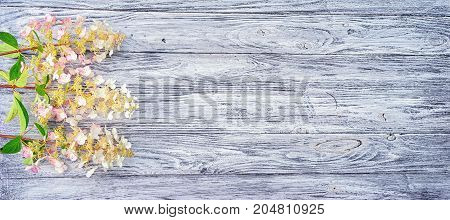 three branches of pink-white hydrangeas on a long wooden table top view with copy space for your text. suitable as a wedding valentine's or birthday invitation card background.