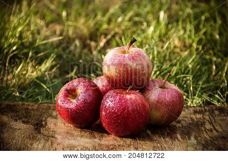 Red apples on a background of green grass. Autumn harvest.