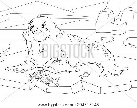 The walrus flippered marine mammal with a discontinuous distribution about the North Pole in the Arctic. Vector illustration. Coloring book