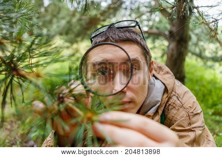 Picture of guy with magnifying glass next to pine in forest on summer day