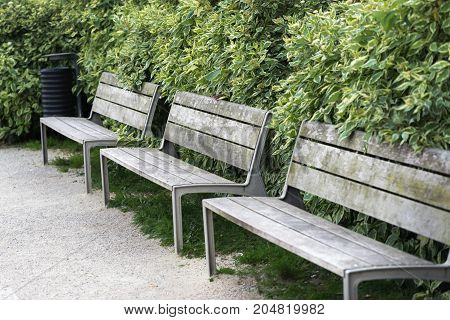 benches in the city park by the green hedge