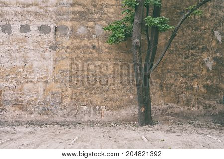 A tree with green leaves grows next to the wall of a large brick house