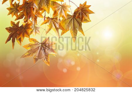 Autumn leaves hanging from a branch with sunshine background