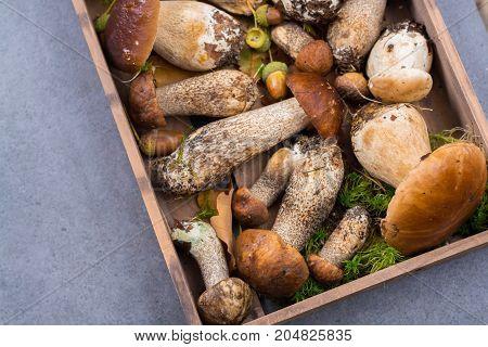 Boletus Edulis, Cepe, Porcini Mushrooms Unwashed On Gray Concrete Background
