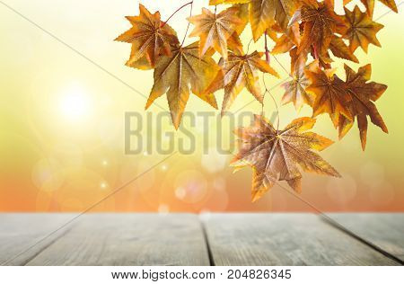 Autumn leaves hanging from a branch over a wooden table