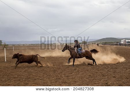 St. Lawrence, Australia - May 16, 2017: A horse rider working cattle at a unique australian campdrafting competition