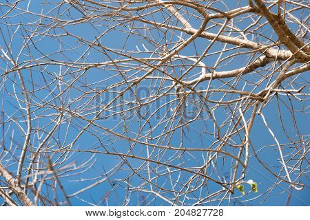 Tree branches without leaf in spring against blue sky background.
