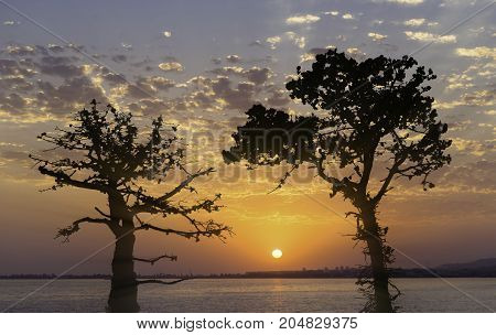 black silhouettes of pine trees backlit against the bright sunset and sea landscape
