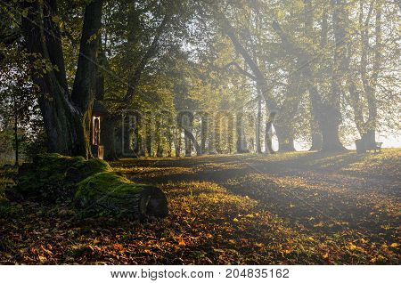 Autumn in the countryside wit yellow foliage and stump