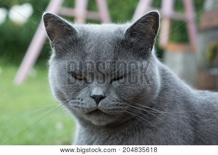 Grey cat with head in detail whisker