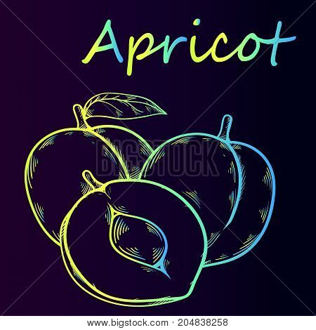 Juicy ripe fruit apricot - contour neon sketch, close-up. Bright sketch of apricots on a violet gradient background