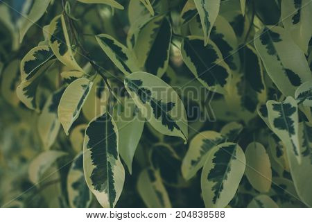 Green leaf texture and background. Close up view of green leaf. Abstract texture and background for designers. Green leaves pattern. Organic background made of leaves.