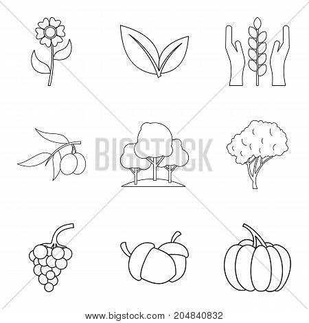 Pollination of flower icons set. Outline set of 9 pollination of flower vector icons for web isolated on white background
