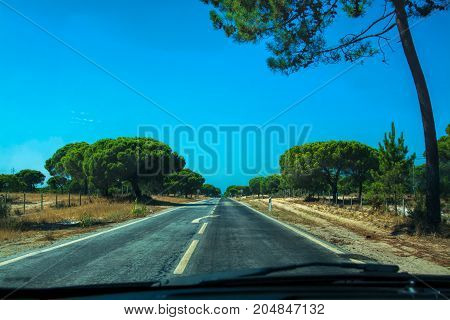 road with pine trees in a summer afternoon