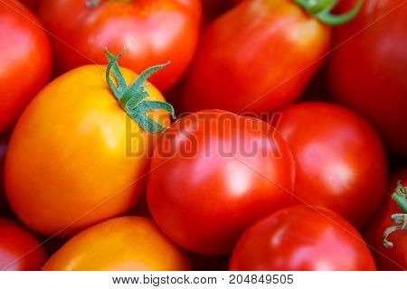 Fresh red tomatoes background. Group of tomatoes