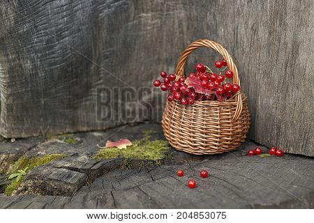 Small basket with autumn red berries on wooden stump. Autumn still-life.
