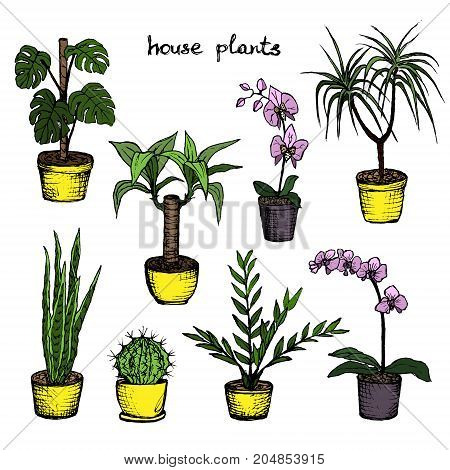 House Plants - Set Of 8 Color Hand-Drawn Plants