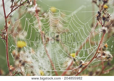 Autumn season in nature. Spider web on flower covered with morning dew - selective focus
