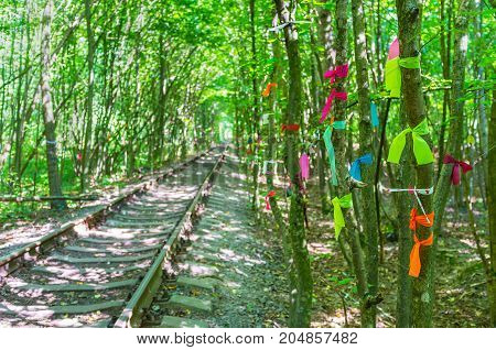 The Ribbons On The Trees