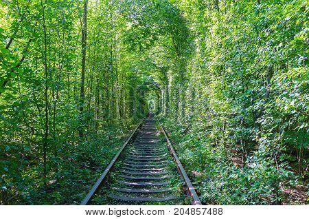 The Landmark In Ukrainian Forest