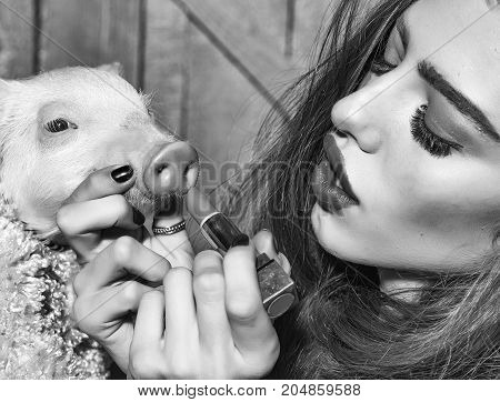 Beautiful young sensual fashionable woman holding cute pink small pig pet in cloth and lipstick in hands on wooden background horizontal picture