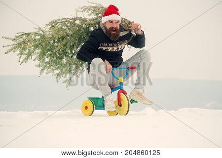 Holiday Celebration Concept