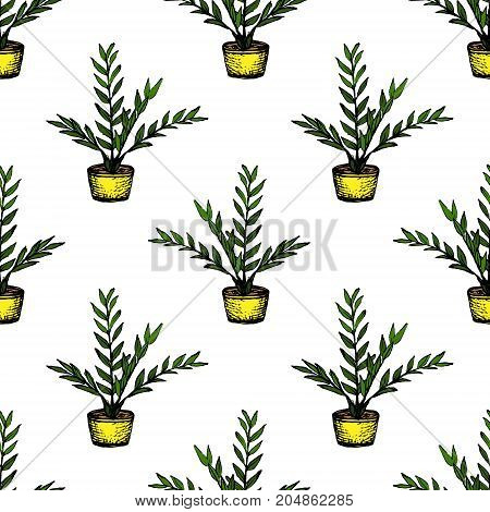 House Plants - Zamioculcas - color seamless pattern