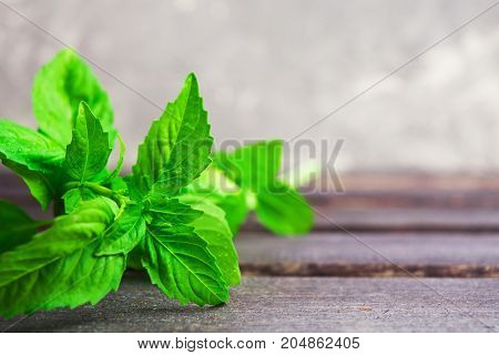 Green fresh aroma basil on wooden background with copy space