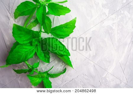 Green fresh basil decoration background with overhead view and copy space