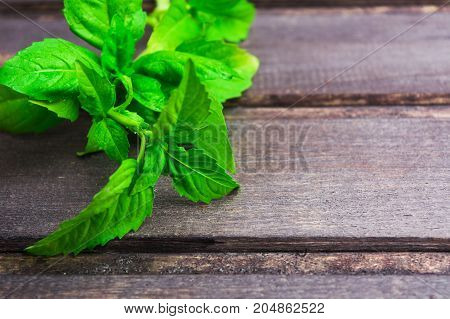 Organic fresh basil over wooden background with copy space