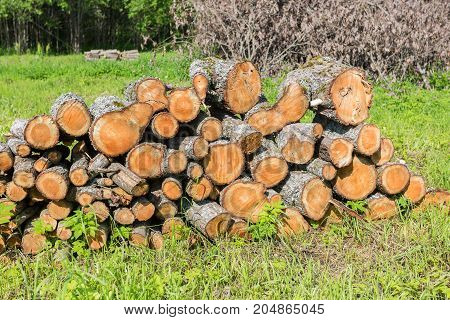 Stock pile of timber chopped down trees at the forest in summertime. De-forestation