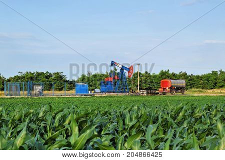 Rod crude oil pump in a corn farmland